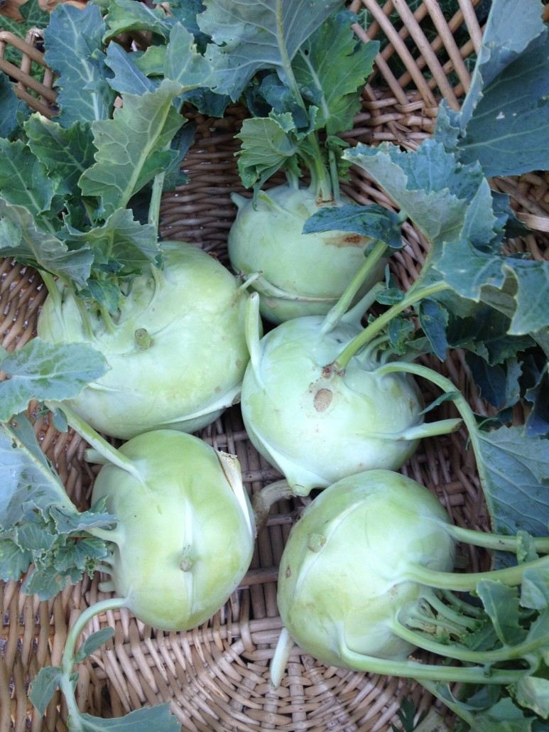 What S In Season Kohlrabi Tolhurst Organic