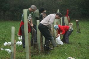 group-planting_23141584283_o
